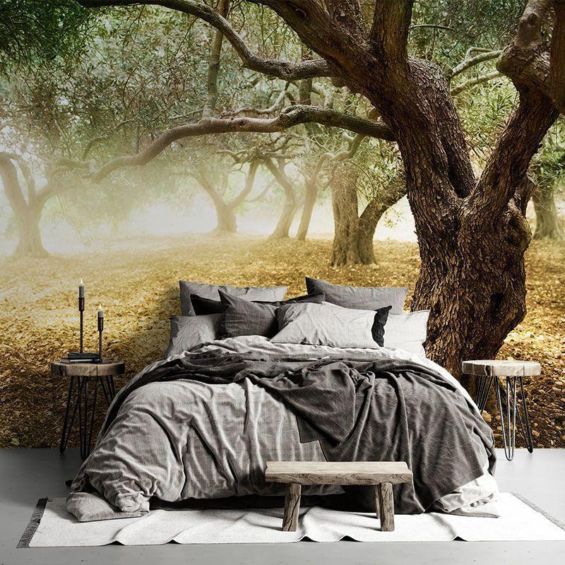 Fototapeta Stare Oliwkowe Drzewo