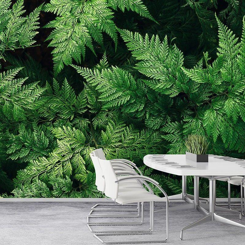 Fototapeta Zielone liście paproci