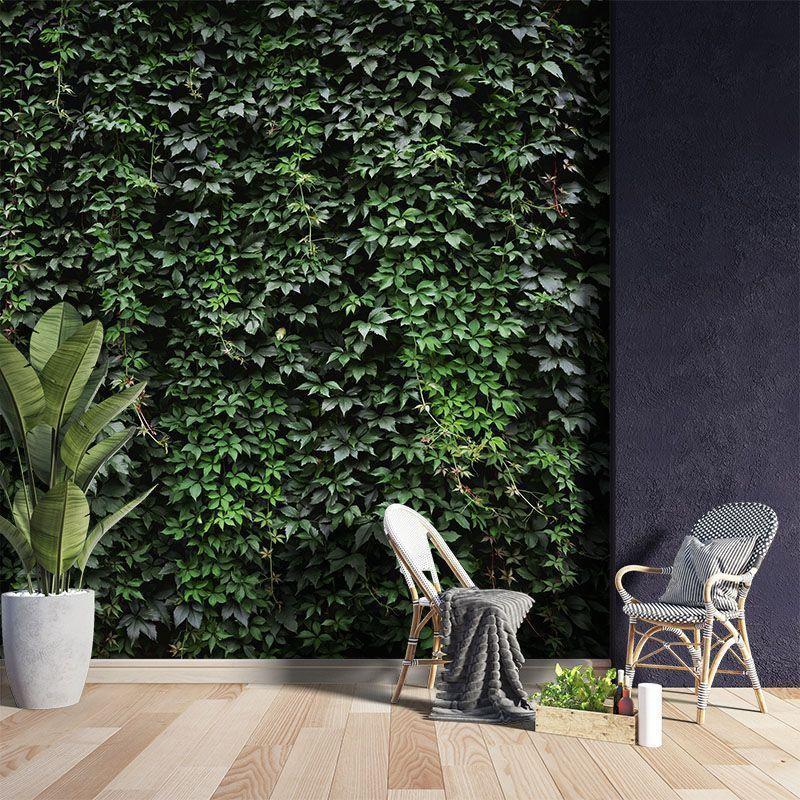 Fototapeta Ściana pokryta bujnym bluszczem