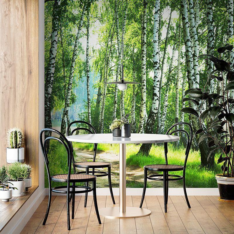 Fototapeta Ścieżką w zielonym lesie brzozowym